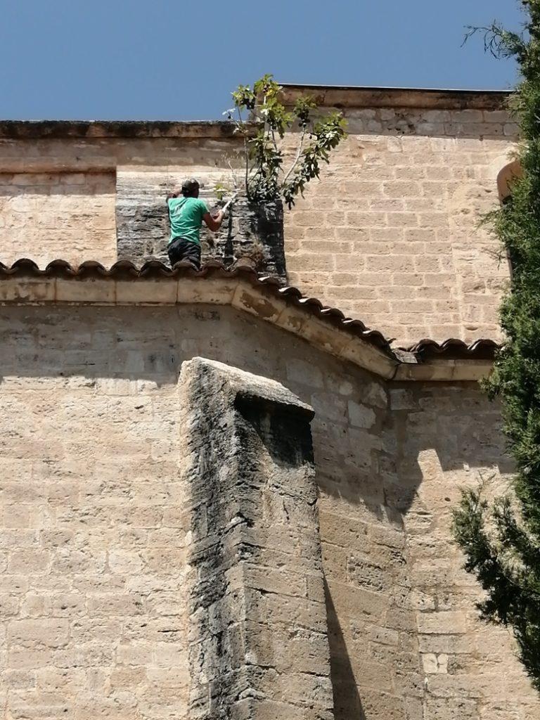 Elagage du toit de l'église à Cucuron